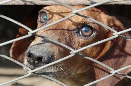 Październik miesiącem dobroci dla zwierząt